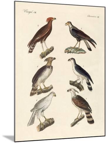 Strange Eagles--Mounted Giclee Print