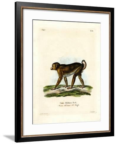 Pig-Tailed Macaque--Framed Art Print