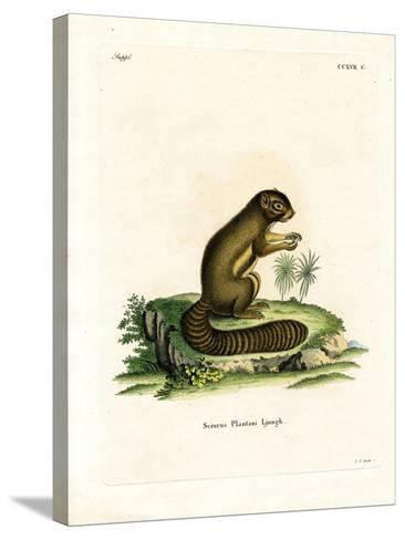 Plantain Squirrel--Stretched Canvas Print