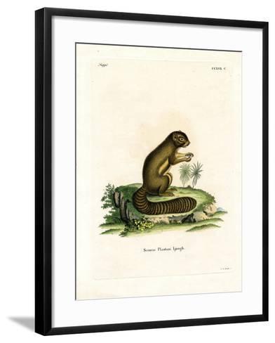 Plantain Squirrel--Framed Art Print