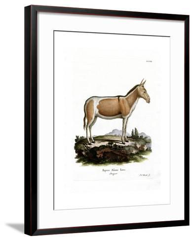 African Wild Ass--Framed Art Print