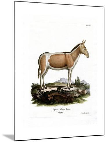 African Wild Ass--Mounted Giclee Print