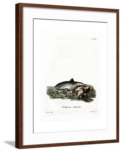 Harbor Porpoise--Framed Art Print