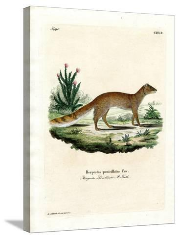 Yellow Mongoose--Stretched Canvas Print