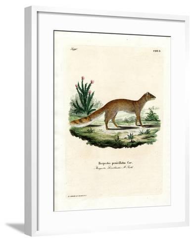 Yellow Mongoose--Framed Art Print