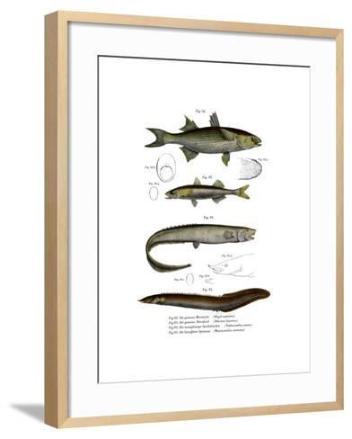 Flathead Mullet--Framed Art Print