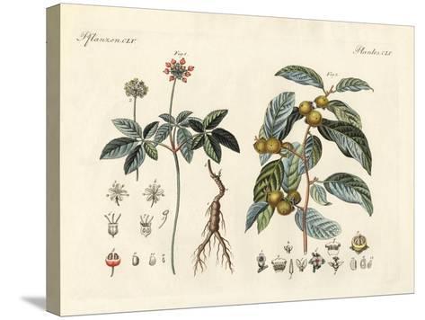 Strange Plants--Stretched Canvas Print