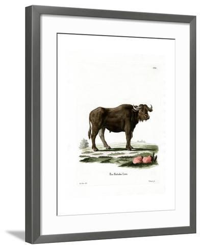 Water Buffalo--Framed Art Print