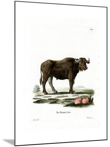 Water Buffalo--Mounted Giclee Print