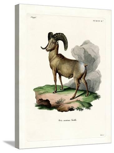 Bighorn Sheep--Stretched Canvas Print