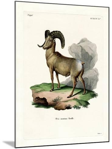 Bighorn Sheep--Mounted Giclee Print