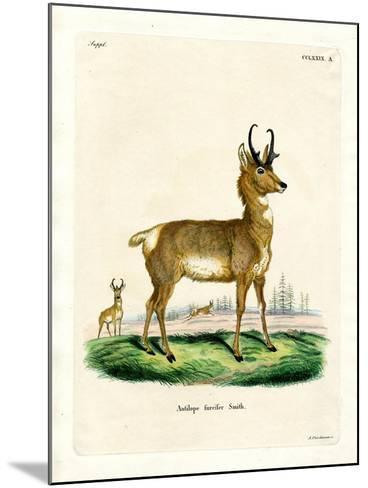 Pronghorn Antelope--Mounted Giclee Print