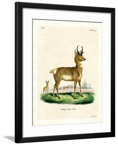 Pronghorn Antelope--Framed Art Print