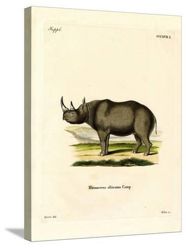 Black Rhinoceros--Stretched Canvas Print