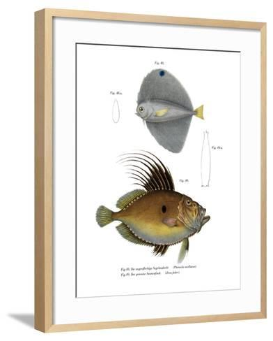 Spotted Fanfish--Framed Art Print