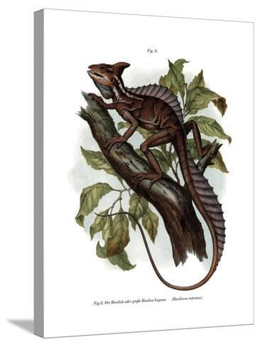 Common Basilisk--Stretched Canvas Print