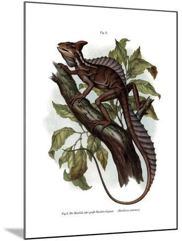 Common Basilisk--Mounted Giclee Print