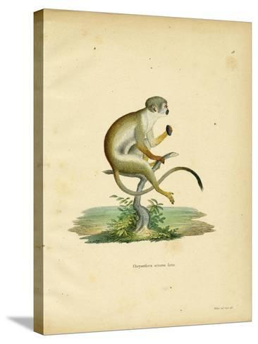 Squirrel Monkey--Stretched Canvas Print