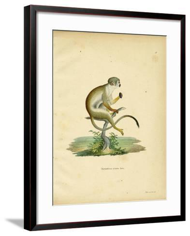 Squirrel Monkey--Framed Art Print