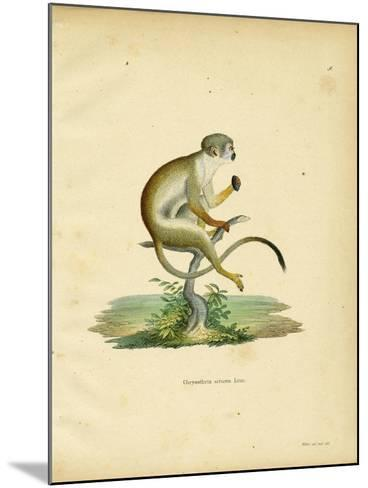 Squirrel Monkey--Mounted Giclee Print