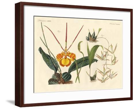 Strange Plants--Framed Art Print