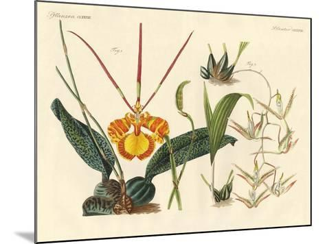Strange Plants--Mounted Giclee Print