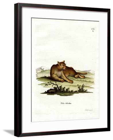 Amazon Cougar--Framed Art Print