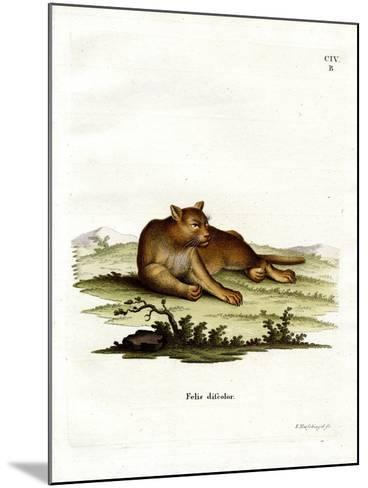 Amazon Cougar--Mounted Giclee Print