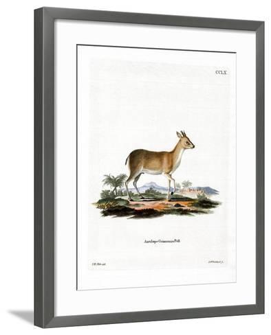 Common Duiker--Framed Art Print