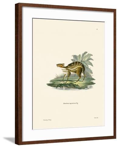 African Chevrotain--Framed Art Print