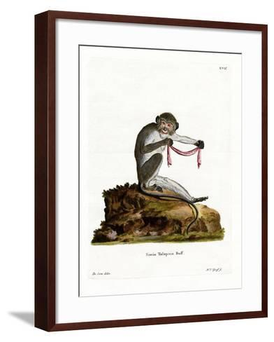 Southern Talapoin--Framed Art Print