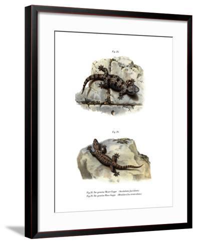 Ringed Wall Gecko--Framed Art Print