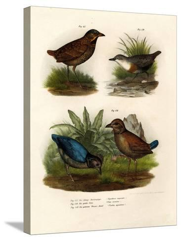 Antpitta, 1864--Stretched Canvas Print