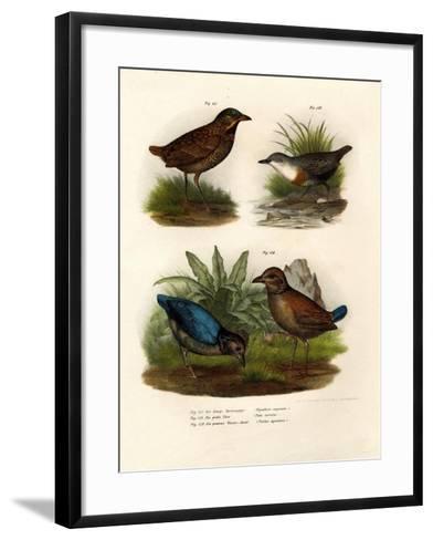 Antpitta, 1864--Framed Art Print