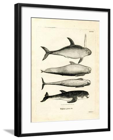 Species of Dolphins--Framed Art Print