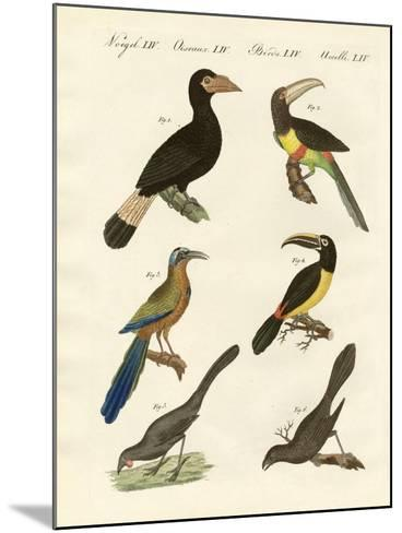 Foreign Birds--Mounted Giclee Print