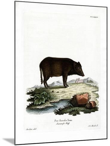 Siamese Wild Boar--Mounted Giclee Print