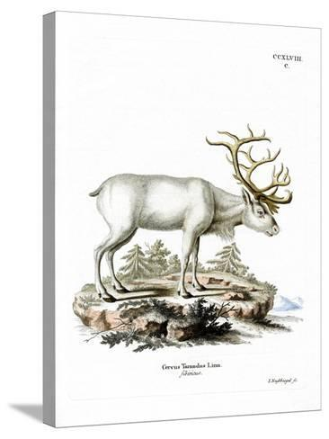Siberian Reindeer--Stretched Canvas Print