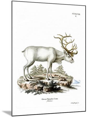 Siberian Reindeer--Mounted Giclee Print