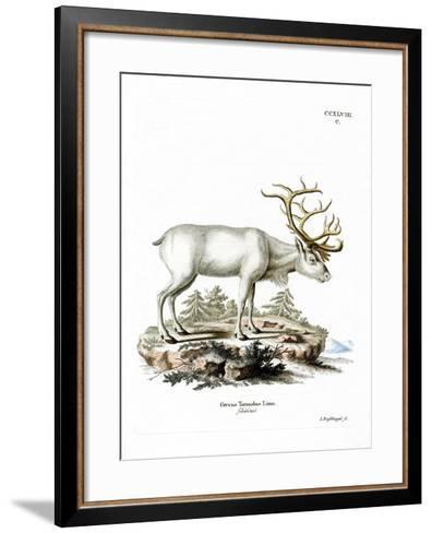 Siberian Reindeer--Framed Art Print