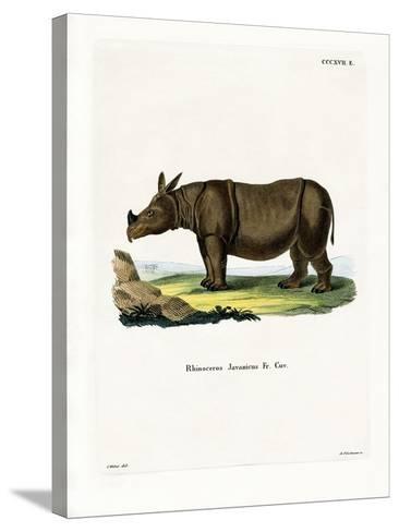 Javan Rhinoceros--Stretched Canvas Print