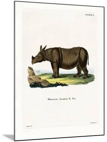 Javan Rhinoceros--Mounted Giclee Print