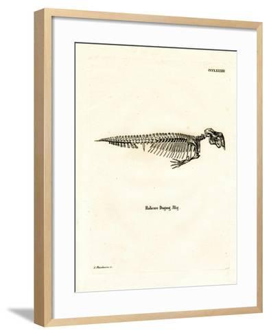 Dugong Skeleton--Framed Art Print