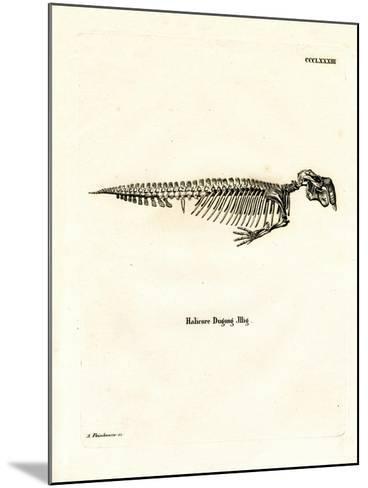 Dugong Skeleton--Mounted Giclee Print