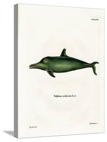 Malayan Dolphin--Stretched Canvas Print