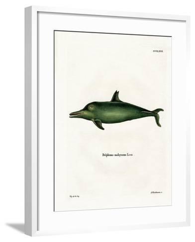 Malayan Dolphin--Framed Art Print