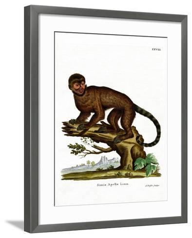 Tufted Capuchin--Framed Art Print