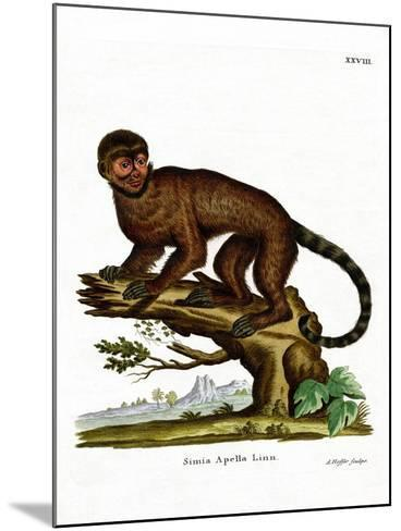Tufted Capuchin--Mounted Giclee Print