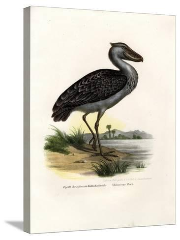 Shoebill, 1864--Stretched Canvas Print