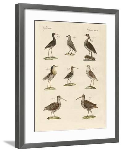 Strange Marsh-Birds--Framed Art Print